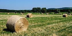 Fields of hay bales in summer near Neuwiller-lés-Saverne, Alsace, France<br /> <br /> (c) Andrew Wilson   Edinburgh Elite media