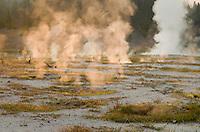 Steam from geyser basin illuminated in morning sun, Yellowstone National Park