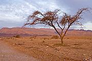 Israel, southern Arava desert near Eilat