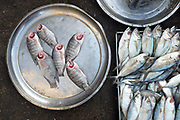 Fresh fish for sale at an early morning street market in Yangon on 16th January 2016, Myanmar.  A large variety of local products are available for sale in fresh markets all over Yangon, all being sold on small individual stalls