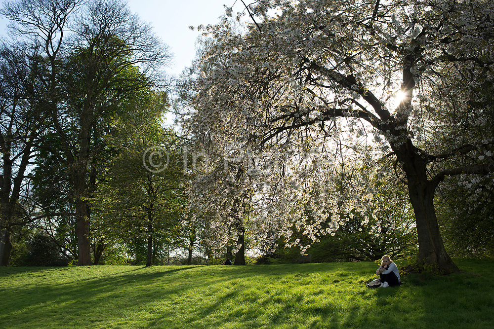 """Girl contemplates under a blossom covered tree. Hampstead Heath (locally known as """"the Heath"""") is a large, ancient London park, covering 320 hectares (790acres). This grassy public space is one of the highest points in London, running from Hampstead to Highgate. The Heath is rambling and hilly, embracing ponds, recent and ancient woodlands."""
