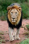 LION'S BEST DAYS