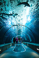 Oregon Aquarium. Newport, OR.
