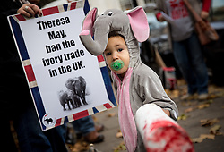 © Licensed to London News Pictures. 16/11/2016. London, UK. Malachi, age 2, holds a model of a severed elephant tusk, as Action for Elephants UK hold a demonstration outside the Department for Environment Food and Rural Affairs, calling for the government to ban all ivory trading in the UK. The UK already has a ban on trade in raw tusks, or 'unworked' ivory, of any age, but not in antiques. Photo credit : Tom Nicholson/LNP