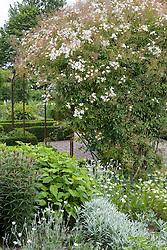 The White Garden at Sissinghurst Castle