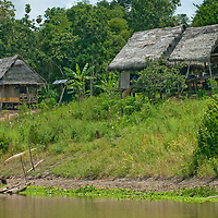 A Great Egret stands beside the Yanayacu River, below San Juan de Yanayacu village in Peru's Amazon Jungle.