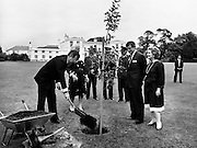 Bush plants tree: US Vice President George Bush, with his wife Barbara, planting a sapling in the grounds of the US Embassy Residence in Dublin.<br /> 5 July 1983