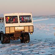 Polar Bear near the Tundra Buggy camp at Cape Churchill, Manitoba, Canada.