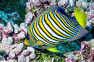 Tahiti Underwater