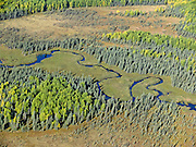 Seen from above, a river meanders through forest in Alaska, USA.