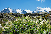 """Hike from Pontresina up Roseg Valley to Fuorcla Surlej for stunning views of Piz Bernina and Piz Rosegg, finishing at Corvatsch Mittelstation Murtel lift. Walking 14 km, we went up 1100 meters and down 150 m. Optionally shorten the hike to an easy 4 km via round trip lift. Pontresina is in Upper Engadine, in Graubünden (Grisons) canton, Switzerland, the Alps, Europe. The Swiss valley of Engadine translates as the """"garden of the En (or Inn) River"""" (Engadin in German, Engiadina in Romansh, Engadina in Italian)."""
