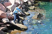 Israel, Eilat Man cleaning the Marina
