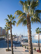 Palm trees in new port development Muelle Uno in Malaga city, Spain