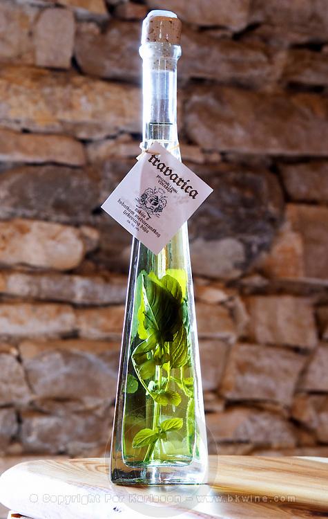 Rakija grappa type spirit flavoured with herbs backlit, Travarica, Toreta Vinarija. With herbs in bottle. Toreta Vinarija Winery in Smokvica village on Korcula island. Vinarija Toreta Winery, Smokvica town. Peljesac peninsula. Dalmatian Coast, Croatia, Europe.