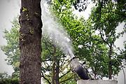 Nederland, Nijmegen, 3-5-2019 De bestrijding van de Eikenprocessierups gebeurt in veel gemeenten preventief. Zo ook in Nijmegen. De rupsen zijn nog niet ontwikkeld en eeen gespecialiseerd bedrijf, de nationale bomenbank, spuit een biologisch bestrijdingsmiddel op de stam en onderste takken. Bacillus thuringiensis is een algemeen voorkomende bacterie die parasiteert op allerlei verschillende rupsensoorten. Hij wordt dan ook vaak ingezet als biologisch bestrijdingsmiddel tegen rupsen. Een ander belangrijk wapen in de strijd tegen de eikenprocessierups is de inzet van nematode Steinernema feltiae. Dit microscopisch kleine wormpje, ook aaltje genoemd, is een natuurlijke vijand van de eikenprocessierups. Die kan niet tegen uv licht en daarmee wordt alleen in de nacht gewerkt. Foto: Flip Franssen