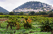 The Seguret village clinging to the hillside, viewed over a vineyard, Domaine de Cabasse. Old Grenache vines in the foreground. Domaine de Cabasse Hotel Restaurant, Alfred and Antoinette Haeni, Séguret, Seguret Cote du Rhone Vaucluse Provence France Europe