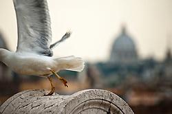 Rome - 2013 - Visuale dal Vittoriano - Cupola di San Pietro