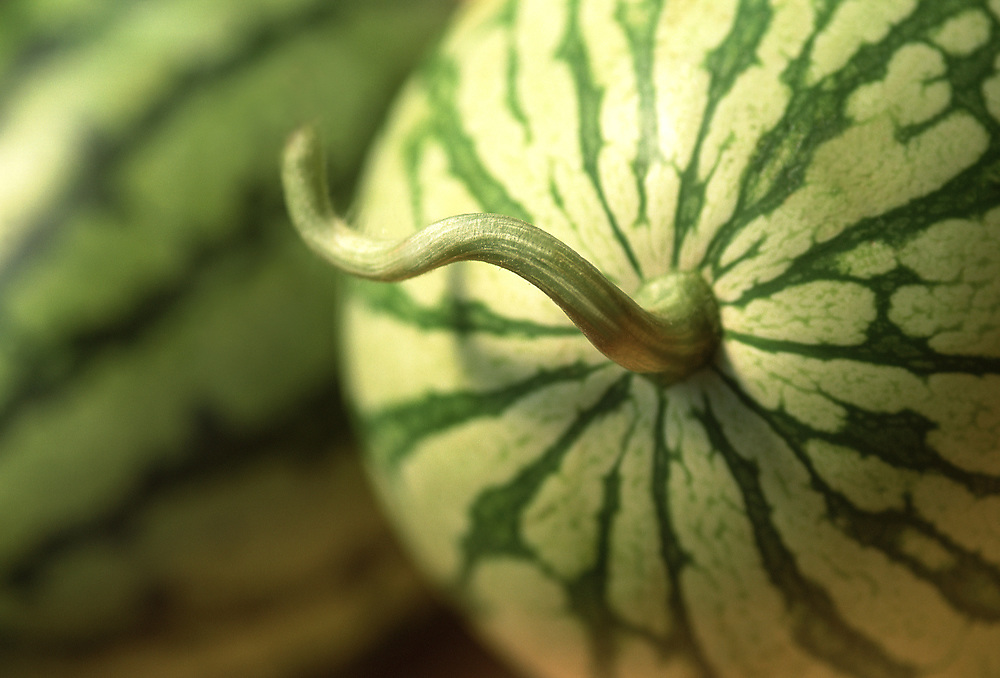 Close up selective focus photo of a couple Golden Watermelons with the stem still attached
