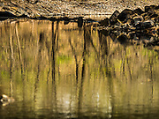 25 APRIL 2015 - MINNETONKA, MINNESOTA, USA:  Trees from surrounding wetlands are reflected in Minnehaha Creek as it runs through Minnetonka, MN. Minnehaha Creek is a 22-mile-long (35 km) tributary of the Mississippi River that flows east from Gray's Bay Dam on Lake Minnetonka through the suburban cities of Minnetonka, Hopkins, Saint Louis Park, and Edina, and the city of Minneapolis. The creek flows over Minnehaha Falls in Minnehaha Park near its mouth at the Mississippi River.     PHOTO BY JACK KURTZ