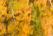 Fall color reflections in the Merced River, Yosemite National Park, California