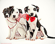 Three shelter puppies are adopted. ©Anne Chadwick Williams