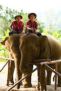 Elephant Hills Luxury Tented Camp in the rainforest in Southern Thailand near Khao Sok National Park. The Elephant Experience which offers an opportunity to interact, feed and wash the endangered Asian Elephant.