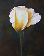 Mary Jo Montgomery Fine Art Originals