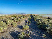 Worn down and overgrown road leading to the Great Salt Lake, Utah early in the morning
