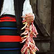 A Romanian peasant farmer wearing a traditional striped apron (zadie), made of a single width of woven wool, holds a string of organically grown beans, Botiza, Maramures, Romania. 90% of vegetable production is grown in small household plots and mainly used for self-consumption and for sale on local markets.