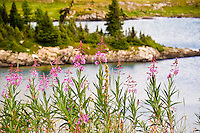 Hiking at Sunshine Meadows in Banff National Park..©2007, Sean Phillips.http://www.Sean-Phillips.com