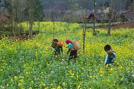 Vietnam Images- Phong cảnh -landscape- Hà Giang hoàng thế nhiệm