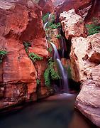 Elves Chasm, Royal Arch Creek, Colorado River mile 116.5, Grand Canyon National Park, Arizona, USA; 6 May 2008; Pentax 67II, Velvia