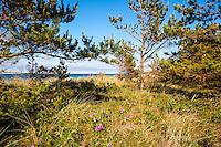 Sweden, Gotska Sandön national park. North side of the island.
