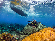 Giant Mushroom coral at Veale's  Reef, Tufi, Papua New Guinea