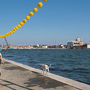 VENICE, ITALY - JULY 19:  A woman walks with her dog towards the temporary votive bridge to the Redentore Church on July 19, 2014 in Venice, Italy. Redentore , which is in remembrance of the end of the 1577 plague, is one of Venice's most loved celebrations. Highlights of the celebration include the pontoon bridge extending across the Giudecca Canal, gatherings on boats in the St. Mark's Basin and a spectacular fireworks display.  (Photo by Marco Secchi/Getty Images)