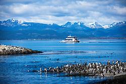 Colônia de cormorões na Ilha dos Pássaros no Canal de Beagle na região de Ushuaia, Argentina. FOTO: Jefferson Bernardes/ Agência Preview