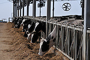 Israel, The dairy cowshed at a Kibbutz, The fans in the barn are used to cool the animals and dry the manure This reduces costs by extending the time between clearing the shed