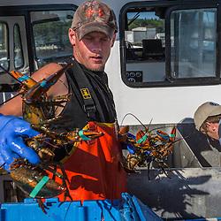 Sternman Matt Bean sorts lobsters aboard the 'Iris-Irene' at the Tenants Harbor Fisherman's Coop in Tenants Harbor, Maine.