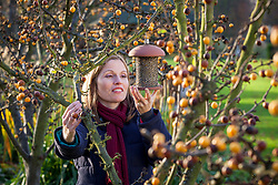 Putting up a bird feeder in a crab apple tree. Malus x zumi 'Golden Hornet'