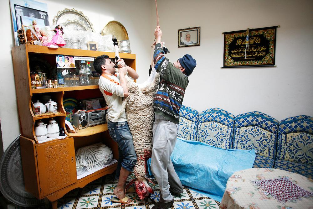 Marrakech, Maroc. 21 Decembre 2007..Aid El Kebir est une des fetes les plus importantes de l'Islam. ..Marrakesh, Morocco. December 21st 2007..Mustapha (left) and the butcher tie up the sheep's to celebrate Eid Al-Adha. Eid Al-Adha is one of the most important celebrations in the Islam traditions.