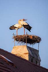 THEMENBILD - Die Freistadt Rust am Neusiedlersee wird auch Hauptstadt der Stoerche genannt. Der Weissstorch (Ciconia ciconia) zaehlt zu den groessten Landvoegeln Europas. Das Federkleid ist bis auf die schwarzen Schwungfedern rein weiss. Schnabel und Staender sind rot. Hier im Bild zwei Weissstörche klappern mit ihren Schnäbeln in ihrem Nest am Kamin eines Ruster Wohnhauses am Dienstag 15. September 2020 in Rust // The free city of Rust on Lake Neusiedl is also called the capital of the storks. The white stork (Ciconia ciconia) is one of the largest land birds in Europe. The plumage is pure white except for the black flight feathers. Beak and pennants are red. Here in the picture two white storks clatter with their beaks in their Nest on the chimney of a house in Rust on Tuesday 15 September 2020. EXPA Pictures © 2020, PhotoCredit: EXPA/ Johann Groder