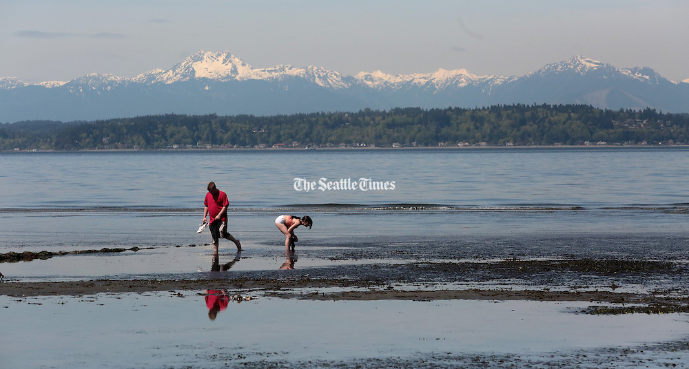 West Seattle beachcombers take advantage of a noon-time low tide to explore the tide pools near Duwamish Head.  (Greg Gilbert / The Seattle Times)