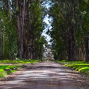 Hacienda la cienaga Latacunga Ecuador is an old farm more than 320 Years old, where people can eat and expend the night. Its entrance is full of eucalyptus trees.