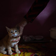 Gudiya Khan holds a kitten that her son brought home, in her home approximately 10km from Ranikhet, India on Dec. 4, 2018.