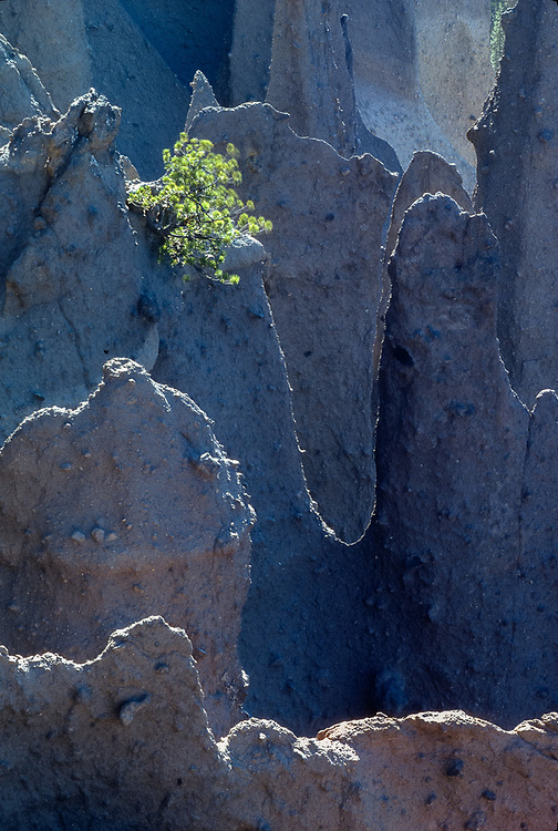 The Pinnacles, pine tree, Crater Lake National Park, Oregon, USA