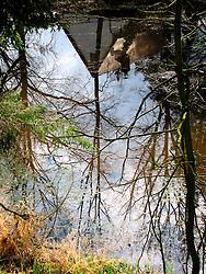 CZECH REPUBLIC BOHEMIA DOUBI 23MAR08 - Reflections in the Luznice river, southern Bohemia.<br /> <br /> jre/Photo by Jiri Rezac<br /> <br /> © Jiri Rezac 2008<br /> <br /> Contact: +44 (0) 7050 110 417<br /> Mobile:  +44 (0) 7801 337 683<br /> Office:  +44 (0) 20 8968 9635<br /> <br /> Email:   jiri@jirirezac.com<br /> Web:    www.jirirezac.com<br /> <br /> © All images Jiri Rezac 2008 - All rights reserved.