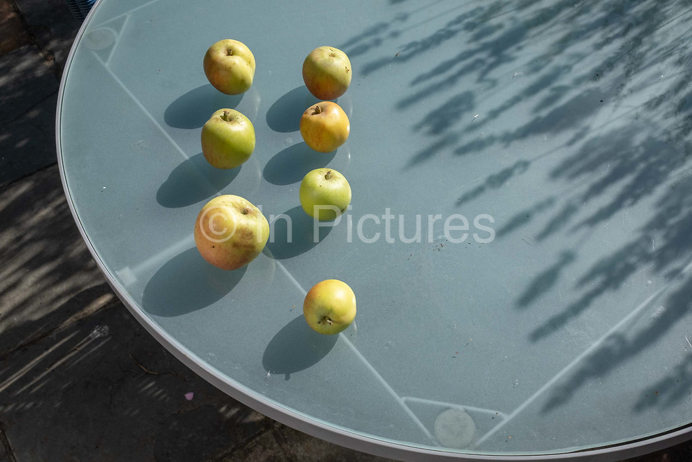 By the shadows of nearby lavender, home-grown apples ripen In sunshine on a garden table, on 29th July 2020, in London, England.