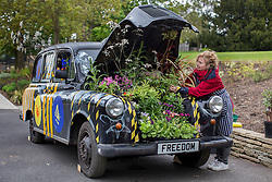 © licensed to London News Pictures. London, UK 17/05/2013. Artist Adele Howitt putting the last touches on her latest artwork at the Horniman Museum, a traditional black cab transformed into garden. By ripping out engine and passenger compartments she creates a garden for bees. Car-Garden project aims to highlight the plight of the UK's bee population and promote the need for urban 'buffer zones' to encourage wildlife. The artwork will be exhibited at the Chelsea Fringe Festival. Photo credit: Tolga Akmen/LNP