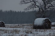 Roe deer (Capreolus capreolus) in winter landscape, Norther Vidzeme, Latvia Ⓒ Davis Ulands | davisulands.com