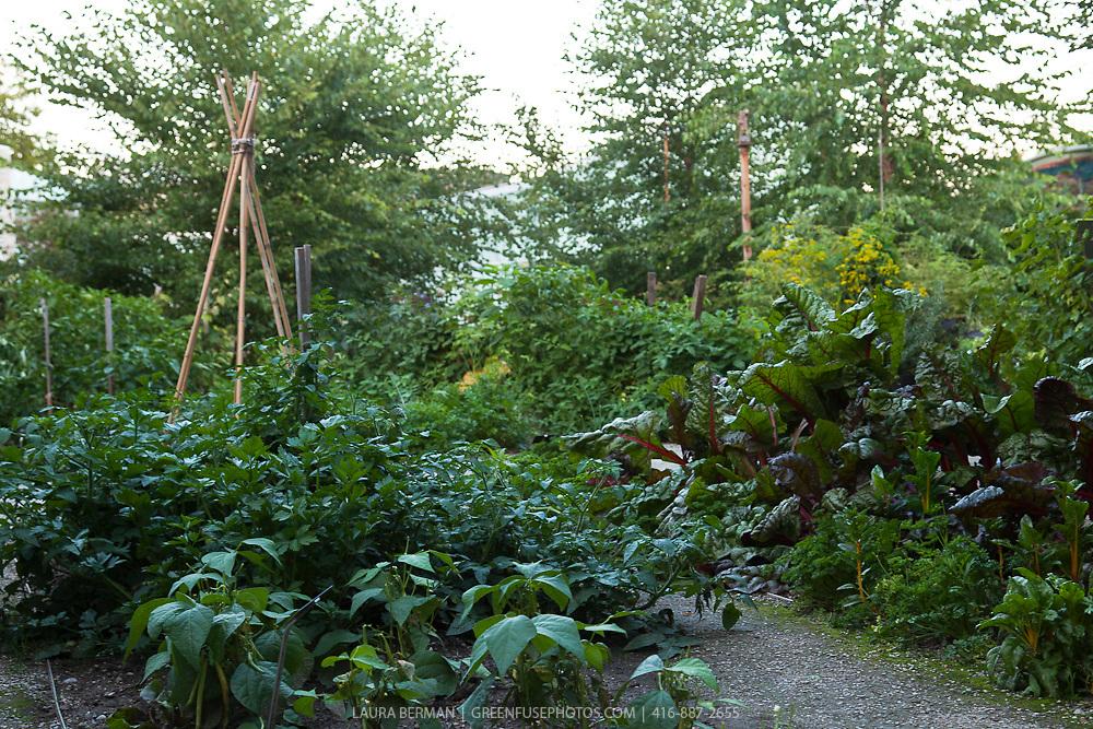 Late summer kitchen garden.